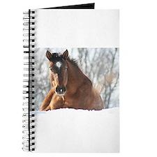 Unique Appy horses Journal