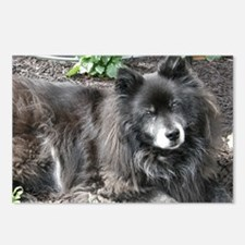 Black Chow Mix Postcards (Package of 8)