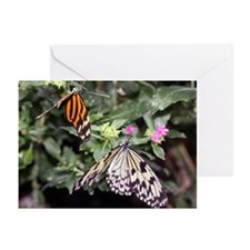 Butterflies Greeting Cards (Pk of 10)