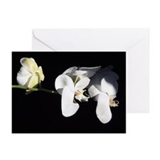 Orchid Greeting Cards (Pk of 10)