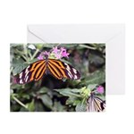 Butterfly 2 Greeting Cards (Pk of 20)
