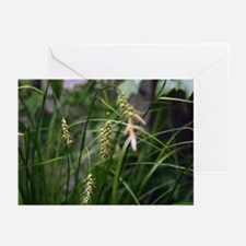 Waving grass Greeting Cards (Pk of 10)