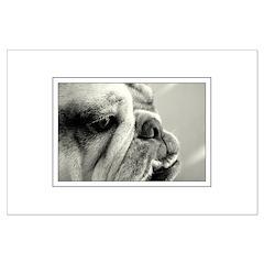 English Bulldog Closeup Posters