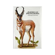 American Pronghorn Rectangle Magnet