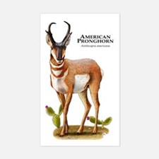 American Pronghorn Decal