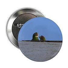 Wild Parrots Button