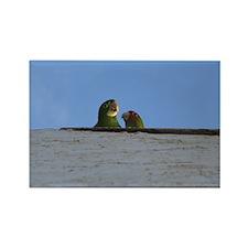 Wild Parrots Rectangle Magnet