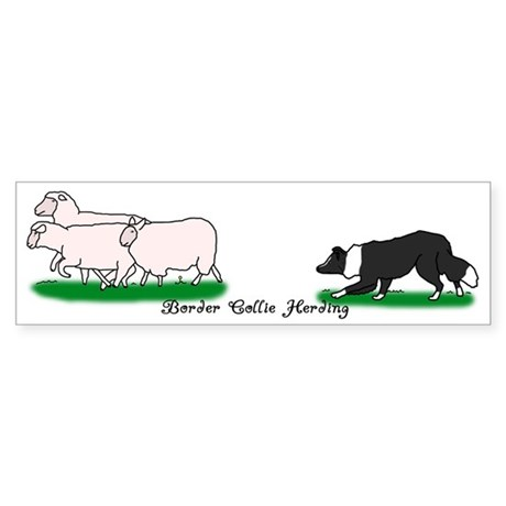 Border Collie Herding Bumper Sticker