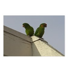 Wild Parrots Postcards (Package of 8)
