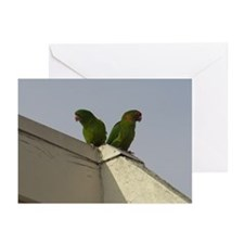 Wild Parrots Greeting Cards (Pk of 10)