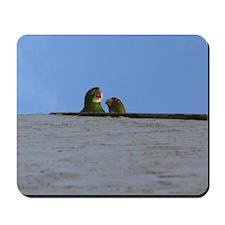 Wild Parrots Mousepad