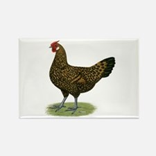 Hamburg Golden Spangled Hen Rectangle Magnet