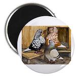 Domestic Flight Pigeons Magnet