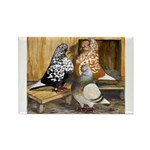 Domestic Flight Pigeons Rectangle Magnet