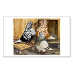Domestic Flight Pigeons Rectangle Sticker