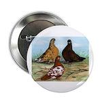 Shortfaced Tumbler Pigeons Button