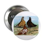 Shortfaced Tumbler Pigeons 2.25