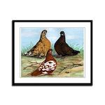 Shortfaced Tumbler Pigeons Framed Panel Print