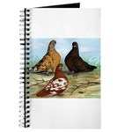 Shortfaced Tumbler Pigeons Journal