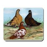 Shortfaced Tumbler Pigeons Mousepad
