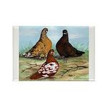 Shortfaced Tumbler Pigeons Rectangle Magnet (100 p