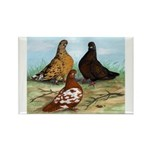 Shortfaced Tumbler Pigeons Rectangle Magnet (10 pa