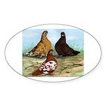 Shortfaced Tumbler Pigeons Oval Sticker
