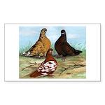 Shortfaced Tumbler Pigeons Rectangle Sticker