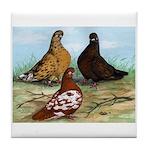 Shortfaced Tumbler Pigeons Tile Coaster