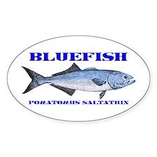 Bluefish - Pomatomus Saltatrix Decal
