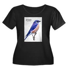 Western Bluebird T