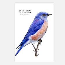 Western Bluebird Postcards (Package of 8)