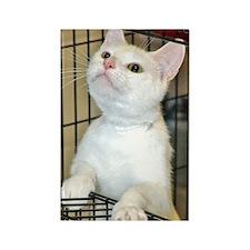 White Shelter Kitten Rectangle Magnet
