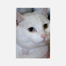 White Shelter Cat Rectangle Magnet