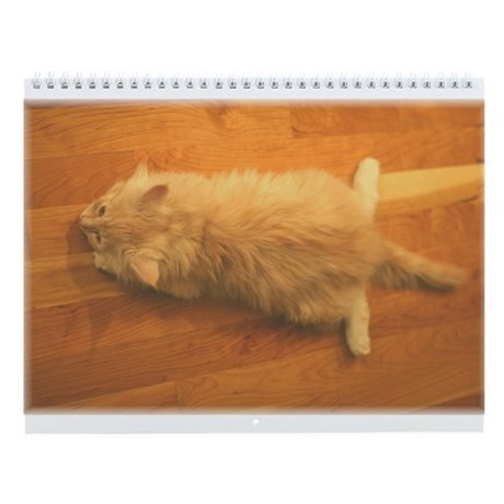 Maine Coon Kittens Wall Calendar