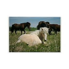 Cute Icelandic pony Rectangle Magnet