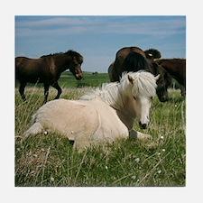 Funny Icelandic horses Tile Coaster
