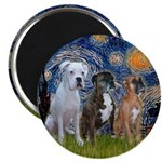 Starry / 3 Boxers Magnet