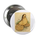 "Muffed Tumbler Pigeon 2.25"" Button (100 pack)"