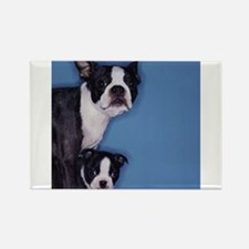 French Bulldog Duo Rectangle Magnet