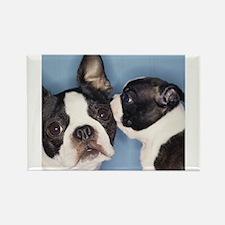 French Bulldog Secret Rectangle Magnet