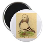 "Tumbler CL Barred Pigeon 2.25"" Magnet (10 pac"