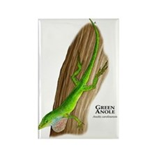 Green Anole Rectangle Magnet