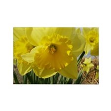 Daffodils Rectangle Magnet (10 pack)