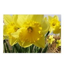 Daffodil Postcards (Package of 8)