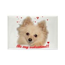 Valentine Pomeranian Rectangle Magnet