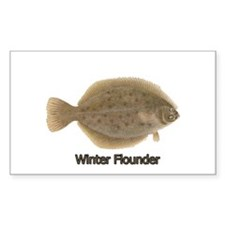 Winter Flounder Decal