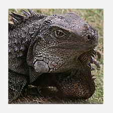 Iguana Drink Coaster