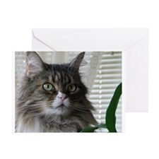 Maine Coon Cat Boxed Notecards (6/w envelopes)