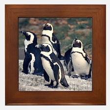 Penguin Parade Framed Tile